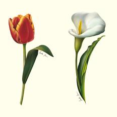 11 rossella piccini illustrazione fiori