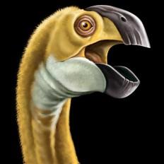 2 rossella piccini illustrazione realistica dinosauro 3