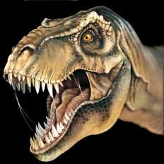 4 rossella piccini illustrazione realistica dinosauro 4
