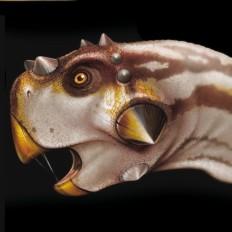 5 rossella piccini illustrazione realistica dinosauro 2