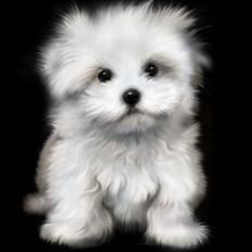 7 rossella piccini illustrazione cane cagnolino