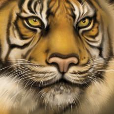 8 rossella piccini illustrazione tigre