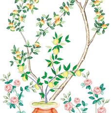 rossella piccini illustrazione 9